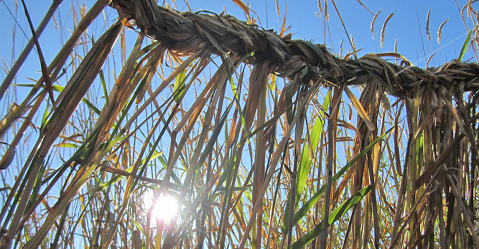 sunlight-detail-crop-RobZ